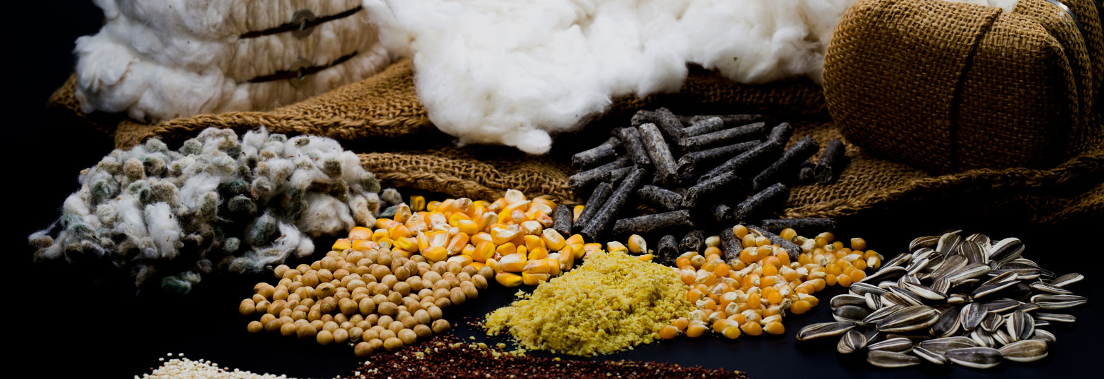 Production and Marketing of Quinoa, White Sunflower Pipe and Waxi Corn